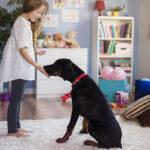 O ensino remoto e as experiências cotidianas: Natureza e Animais